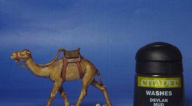 Kamele bemalen